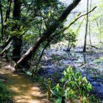 Day04 2020/4/11 土曜日の散歩 西初石小鳥の森