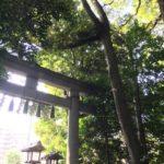 The warp gate おすわさまの「茅の輪」と夏越の祓