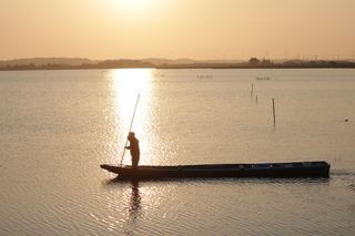 夏至の朝 金色を見に 手賀沼へ