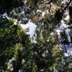 「都心から一番近い森のまち」にある身近な森を紹介 駒木ふるさとの森