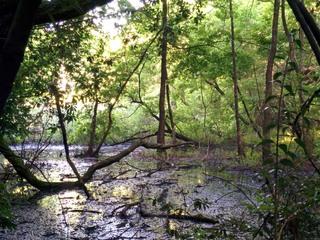「都心から一番近い森のまち」の貴重な湿地 西初石小鳥の森