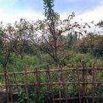 わびさび効いた大畔(おおぐろ)の里山と森のアドベンチャー 秋のおおたかの森 周回6.0km