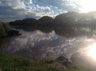 江戸川の水面