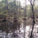 こんぶくろ池360°自然を活かした森のコンサート会場