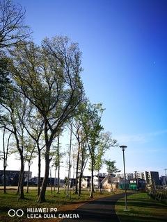 十太夫近隣公園 定点観察(穀雨編)
