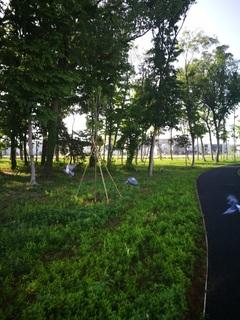 十太夫近隣公園 定点観察(立夏編)