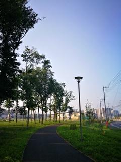 十太夫近隣公園 定点観察(小満編)