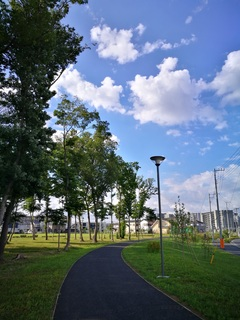 十太夫近隣公園 定点観察(芒種編)