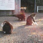 魅惑の猫スポット 天形星神社と豊四季カトリック教会