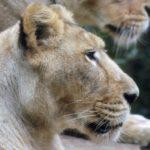 ライオンが皿洗いセンター試験を開催 11/10「Harvestival」で