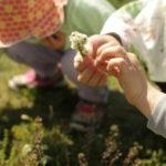 GW初日は「こども春まつり」の柏の葉公園に行ってきます。