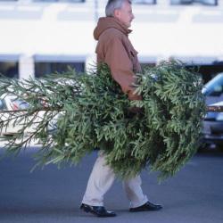 IKEAの本物の木のクリスマスツリー2,499円 回収期間に返すと同額のクーポンが貰えて実質無料