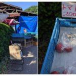 Day36 里山のトマト、秘境の宝物